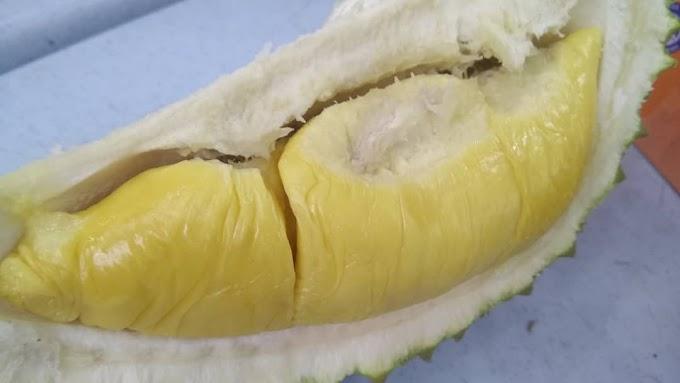 Hilang Kempunan Pulut Durian
