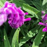 Gardening 2013 - 115_6213.JPG