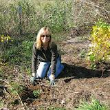 Guilford Salt Meadows Sanctuary Planting - IMG_7824.JPG