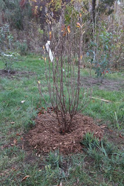Hammo Fall Planting - Jim Murtagh - BC3G2534.jpg