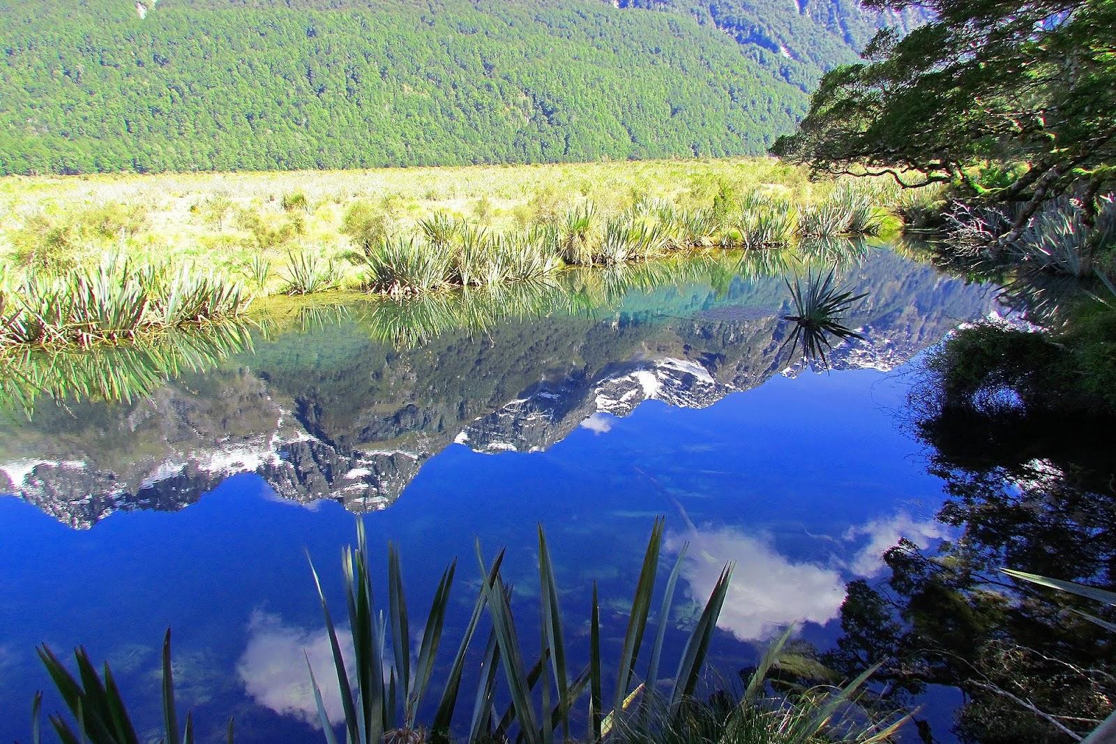 Milford Sound Stream Reflection 2.jpg