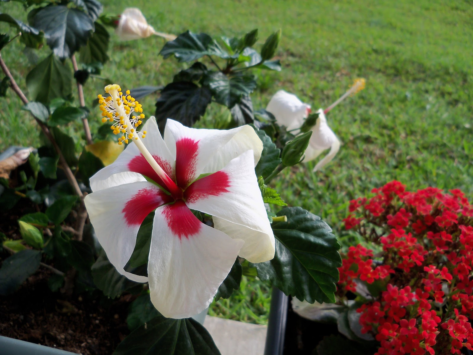 Gardening 2010, Part Two - 101_2346.JPG