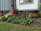 Estelle's spring flowers