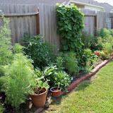 Gardening 2010, Part Two - 101_3410.JPG