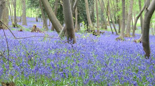 CIMG6381 Heathersome's Wood