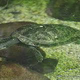 03-11-15 Dallas World Aquarium - _IMG1004.JPG