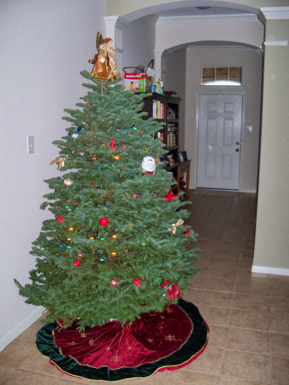 Christmas Lights - 115_9043.JPG