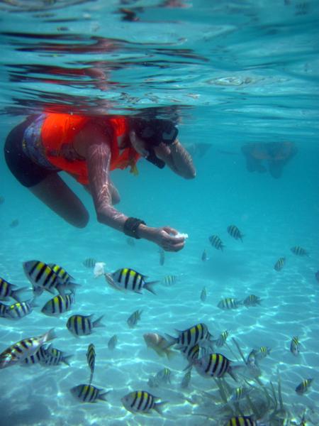 Fish feeding at Pandan Island, Puerto Prinsesa, Palawan