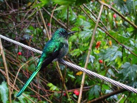 colibrí en Acaime