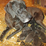 Saffy & her puppies at@ 4 days
