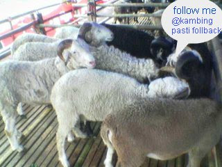 tips mendapat banyak followers