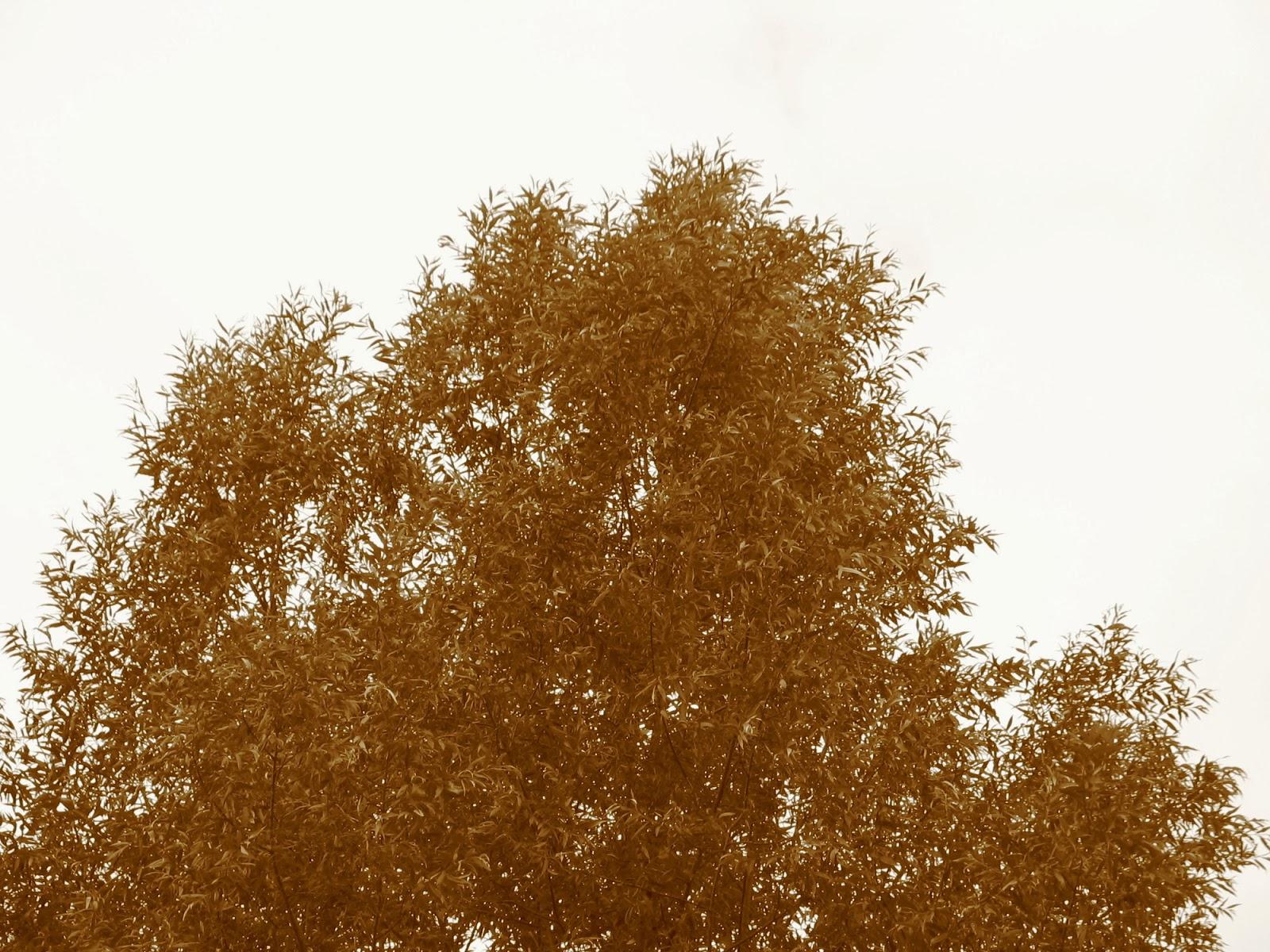 Taborjenje, Lahinja 2005 1. del - img_0789.jpg
