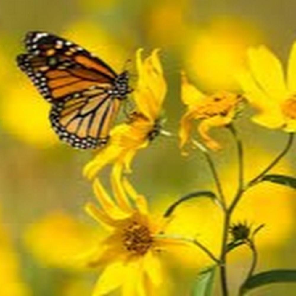 cwilliams6381 avatar