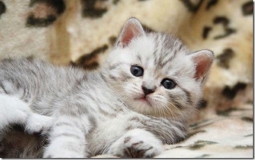 fotos de gatos (17)