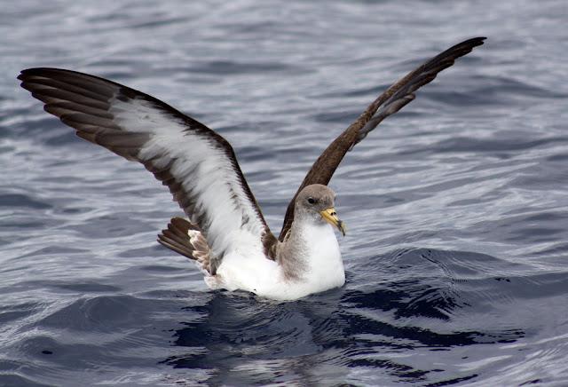Esses magnificos Cetacios -  Cachalotes - Golfinhos etc IMG_3455a