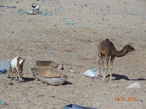 marrocos - Marrocos e Mauritãnia a Queimar Pneu e Gasolina - Página 6 DSC05949