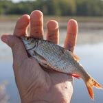 20150801_Fishing_Virlia_018.jpg