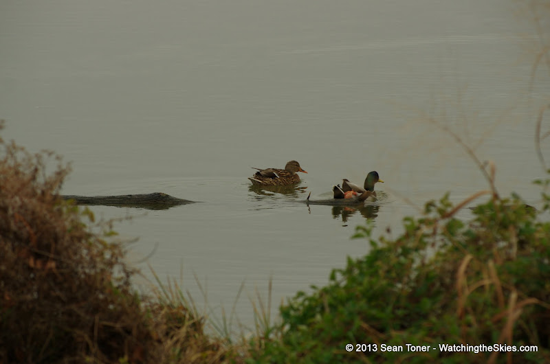 01-26-13 White Rock Lake - IMGP4335.JPG