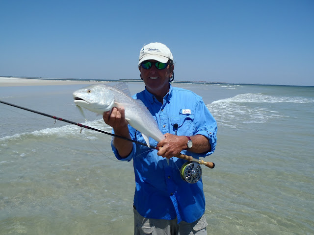 Red fish in the surf ngto message board for Capt dave fishing