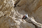 FIN BEC   Pour attraper les insectes et les araignées dans les fissures des rochers
