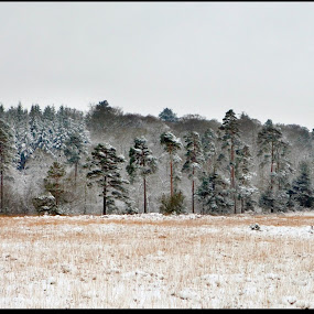 Treeline3 by Alex Newstead - Landscapes Forests ( contrast, england, uk, park, snow, white, forest, monotone, hampshire, black )