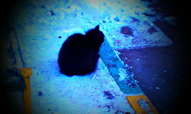 Синдром черной кошки