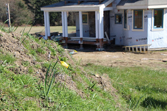 Photo: Here's where all the daffodils went, that used to be along the road!