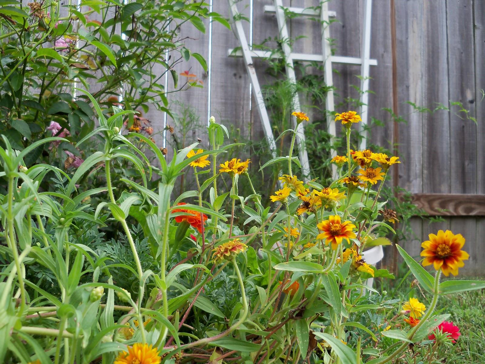 Gardening 2010, Part Three - 101_5168.JPG
