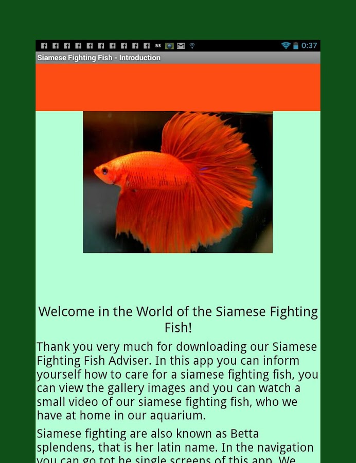 Siamese fighting fish guide android apps on google play for Siamese fighting fish crossword