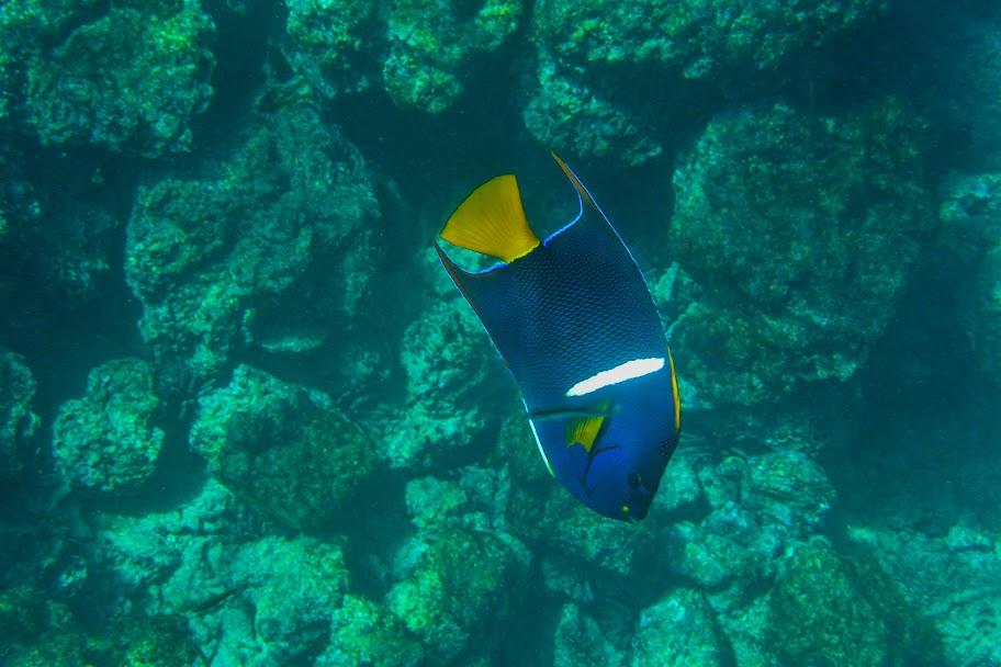 galapagos - Galapagos_FB-113.jpg