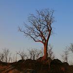 Baobab Tree 1555519994.jpg