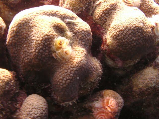 Bonaire 2011 - PICT0135.JPG