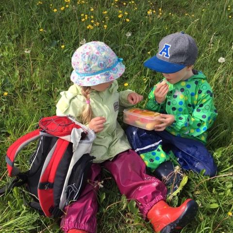 Obst-Picknick