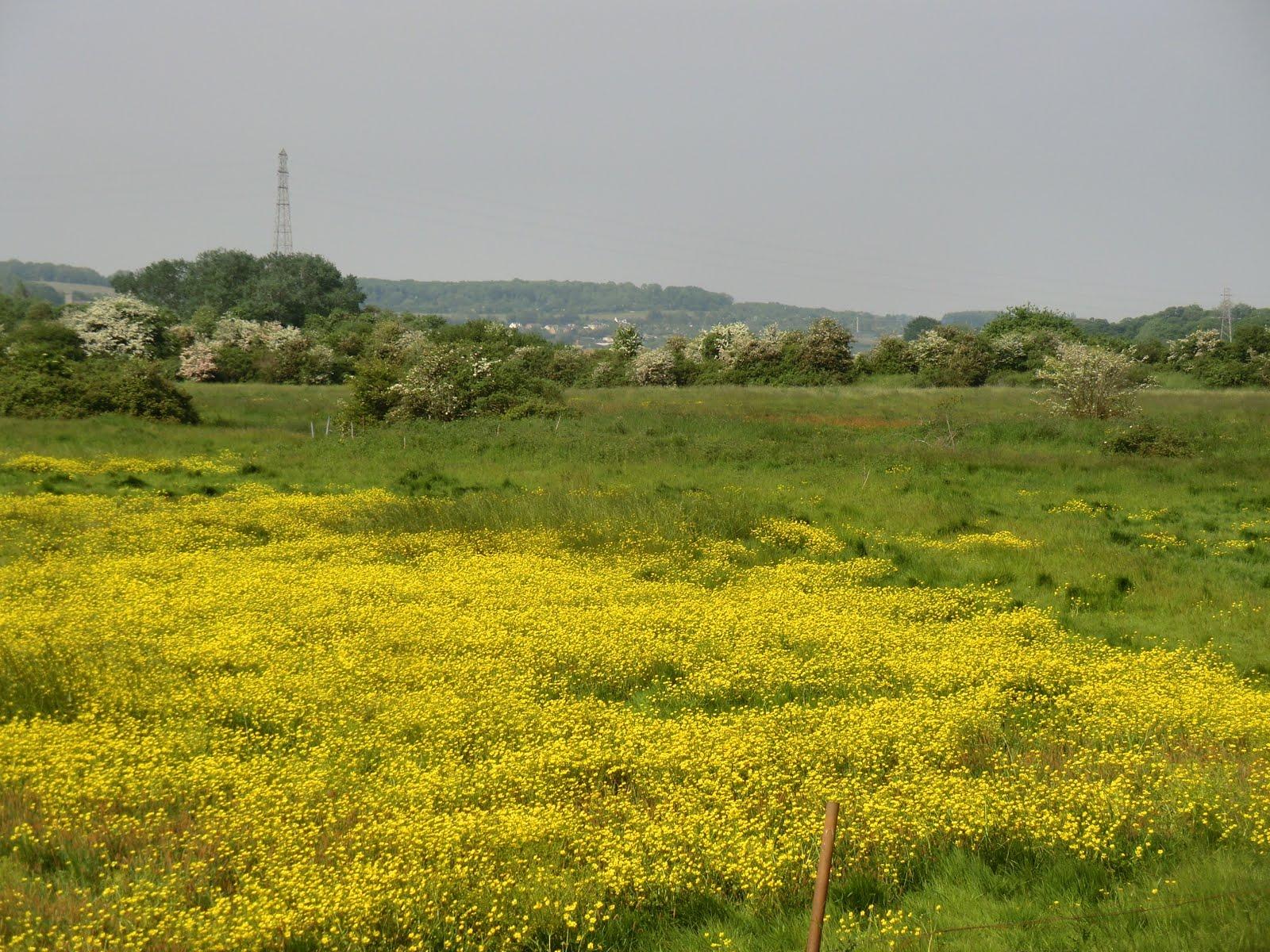 CIMG4449 Halling Fresh Marsh