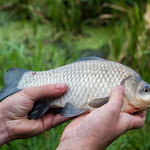 20150729_Fishing_Zhilianka_053.jpg