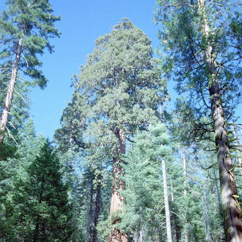 Yosemite_29.jpg