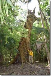 Andy by massive oak stump
