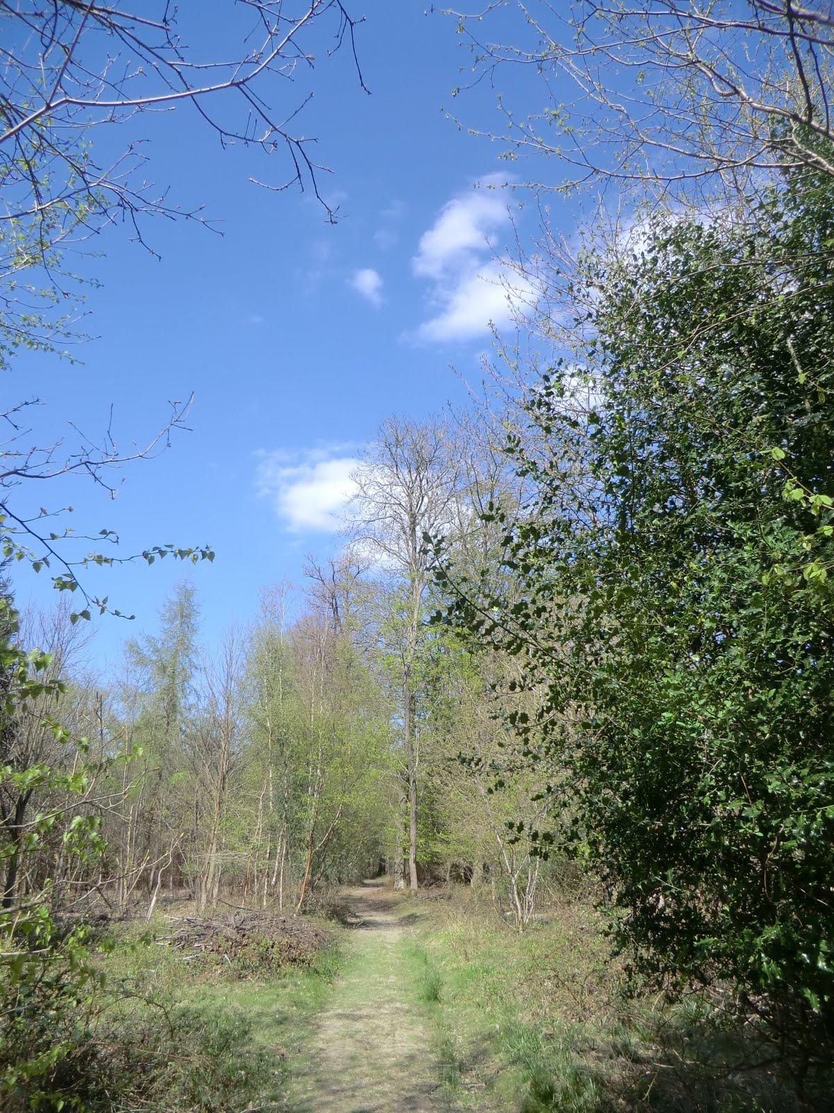 CIMG6349 Woodland path to Markbeech