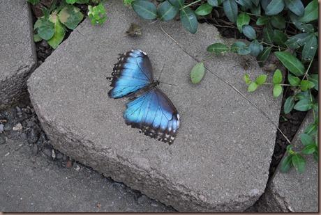 08-17-16 Boise Zoo 25