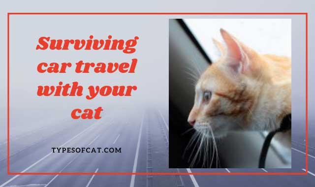 Surviving car travel with your cat