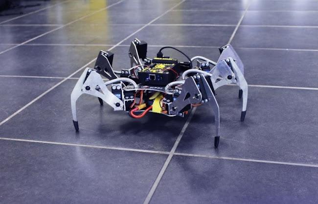 erle-spider.jpg