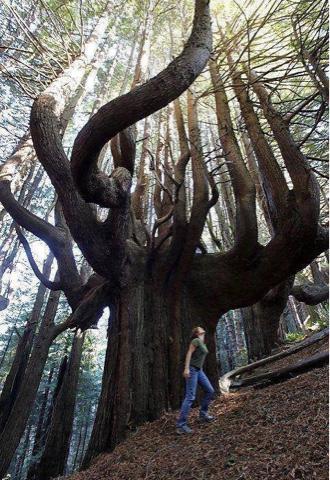 perempuan di tengah hutan, pohon dengan batang ranting besar