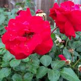 Gardening 2010 - 101_1592.JPG