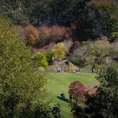 2011 04 25 Mt Lofty Botanic Garden - IMG_6381.jpg