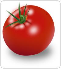 คำศัพท์ภาษาอังกฤษ_tomato_Vegetable