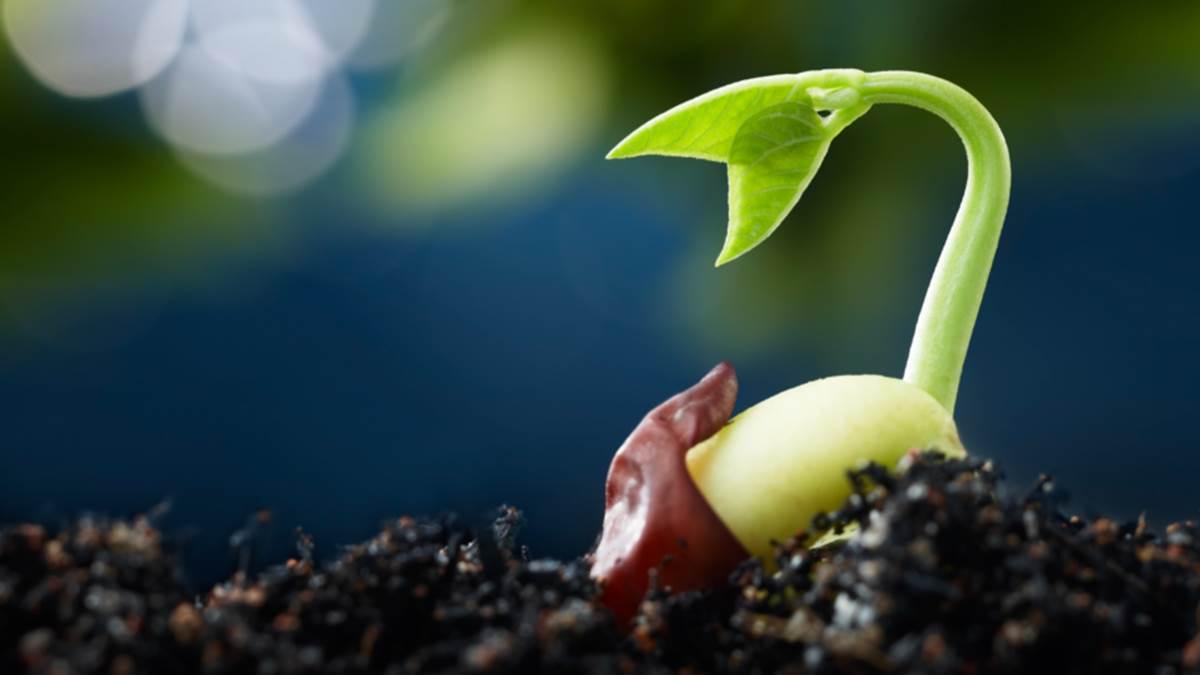 Bông lúa trĩu hạt (31.01.2020 – Thứ Sáu Tuần 3 TN - Thánh Gioan Bosco, linh mục)