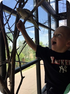 Budgie Buddies Seed Stick Birds at Cheyenne Mountain Zoo