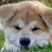 Blu Coronado avatar image