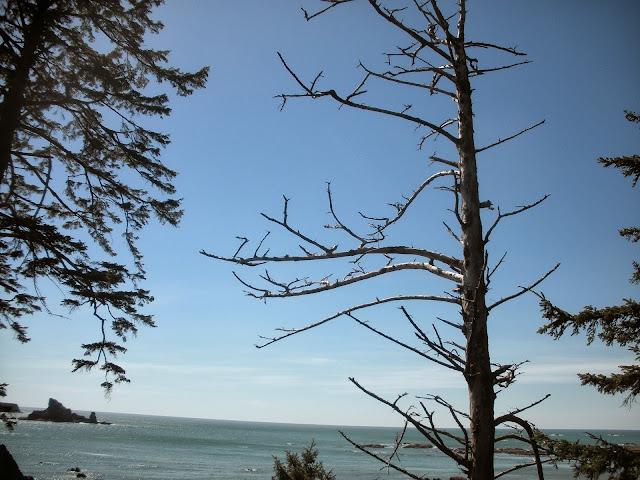 Rialto Beach May 2013 - DSCN0211.JPG