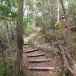 Log Steps on Birrawana Track (119800)